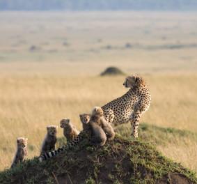 Safari tanzanie, à la découverte des animaux rares